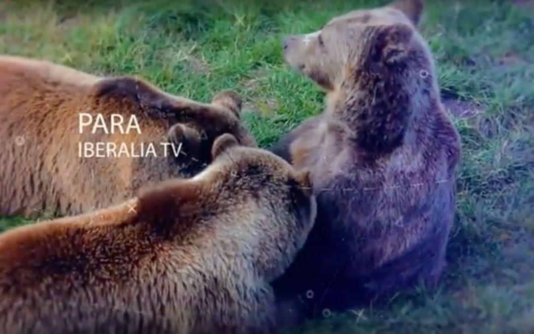 IberialiaTV